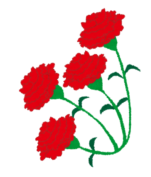 Carnation4