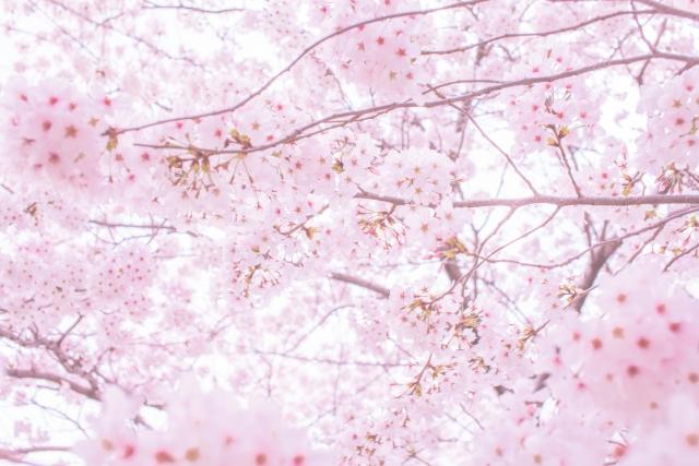 お花見の意味や由来や起源を簡単に説明!