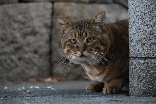 野良猫を保護したい方への記事まとめ!