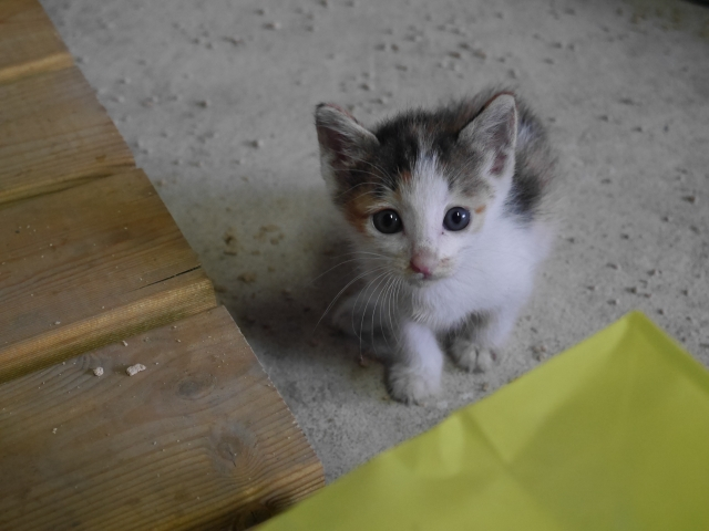 野良猫を保護したい!シャンプーの仕方や飼い方は?