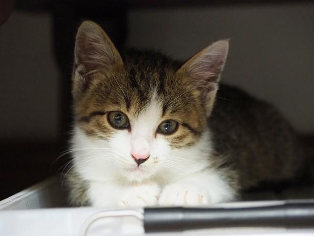 野良猫にあげる餌って何がいいの?餌の種類など公開