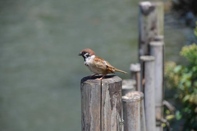 今こそ野鳥観察をしよう!記録の方法やグッズも紹介