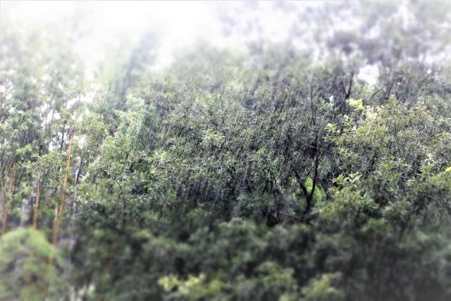 嵐の中の森